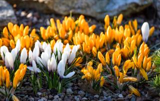 Wiosna w Ustce