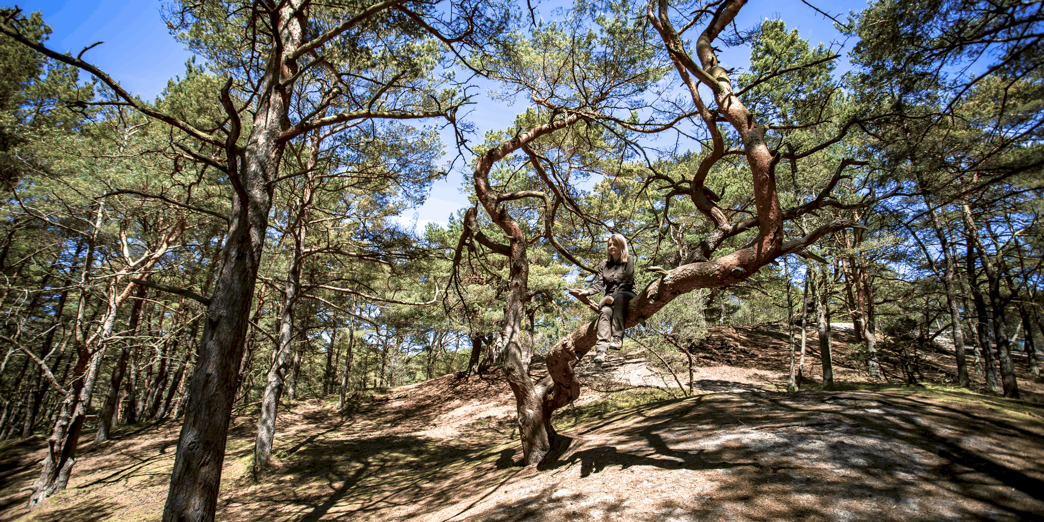 Las w Ustce